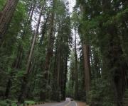Road Trip to Seattle: Northern California Coast