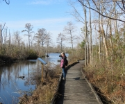 Pocosin Lakes National Wildlife Refuge