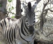 iMfolizi Game Reserve