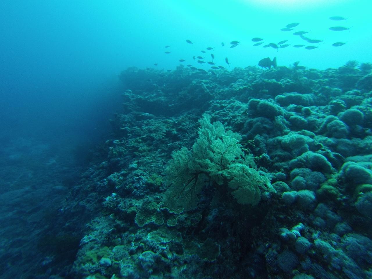 southern great barrier reef  u2013 mv dirona